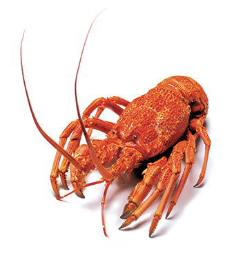 Img Lobster Isolated